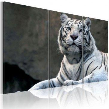 Tableau Tigre blanc  | cosy-home-design.fr