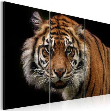 Tableau Tigre prédateur  | cosy-home-design.fr