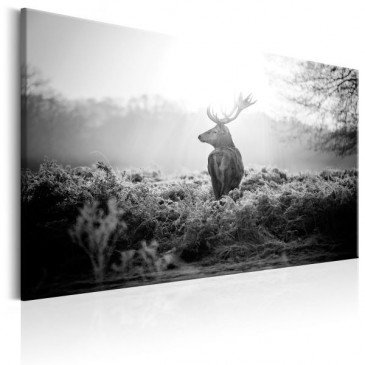 Tableau Black and White Deer  | cosy-home-design.fr